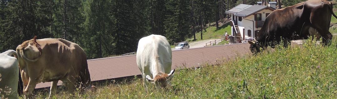 Malga Pien de Vacia