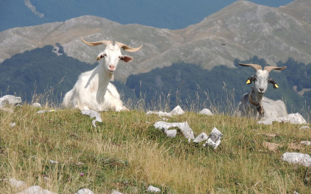 Il latte che scende dalla montagna
