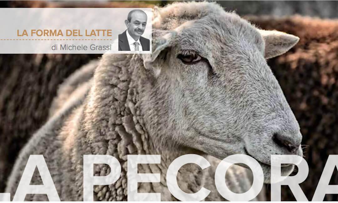 La pecora, un animale ricco che il mercato ha reso povero